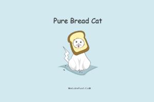 best funny cat puns
